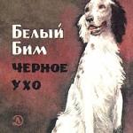 BelyBim
