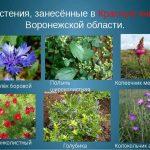 Растения Красная книга